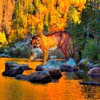 Autumn Cougar