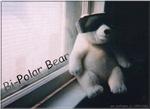 Bi-Polar Bear