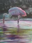 FLORIDA LIVING-Roseate Spoonbill