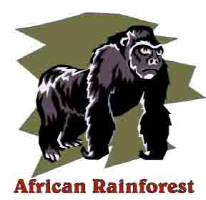 The African Rainforest