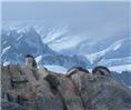 Penguins/Antarctica Mousepads