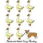 Pembroke Welsh Corgi Herding