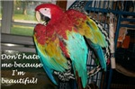 Critter Camp Rescued Birdies!