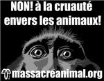 NON À LA CRUAUTÉ ENVERS LES ANIMAUX