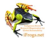 Painted Madagascar Poison frog shirts