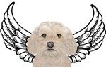 Cockapoo Angel