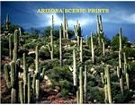 Arizona Scenic Landscapes Yearly Calendars