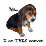 Innocent As I Look Puppy
