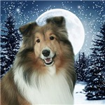 Winter Night Sheltie