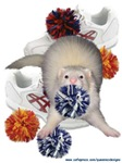 Cheerleading Ferret