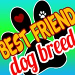 Best Friend Dog Breeds