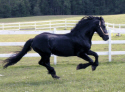 Baron Galloping