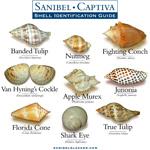 Shell I.D. Guide