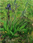 The Iris by Vincent van Gogh