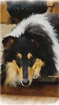 Copy of Rough Collie IPhone, IPad, IPod Cases