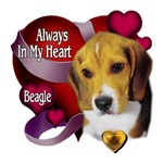 Beagle_Always In My Heart