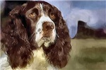 English Springer Spaniel Gifts and Merchandise
