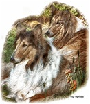 Collies Lover Art Gifts