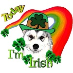 Wanna Be Irish Alaskan Malamute