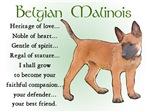 Belgian Malinois Puppy Gifts