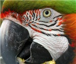 Macaw & Parrots