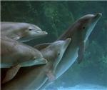 Dolphin & Manatee