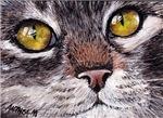 CATS - CATS EYES