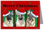 Santa Hat German Shepherd Dogs