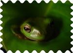 Lazy Frog Design