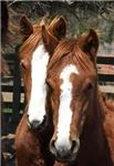 Heritage Horses