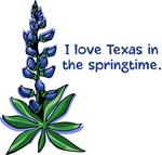 Bluebonnets in the Springtime
