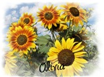 Sunflowers for Olivia