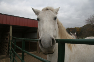 Horse & Pony Photography