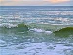 Myrtle Beach Wave