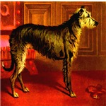 Deerhound Cassell 1881 Digitally Remastered