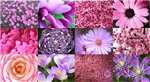 Pink Flowers Photography Collage