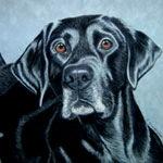 Fetch Mode, Black Labrador