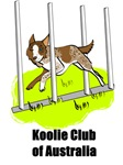 Koolie weaving with Koolie Club of Australia