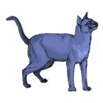 Russian Blue Cat Portrait