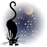 Nocturnal Black Cat I