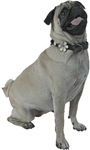Silver Pug