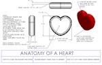 Anatomy of a heart