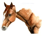 Horse-Brown
