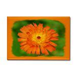 ...Wild Flower 01...