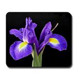 ...Iris...