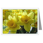 ...Daffodils 02...