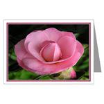 ...Camellia 01...