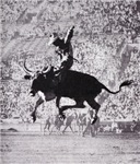 Cowboy T-shirts & Gifts, cowboy on a bucking bull.