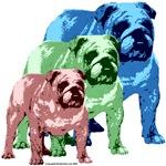 3 Tone Bulldog