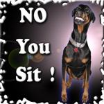 Doberman NO YOU SIT!
